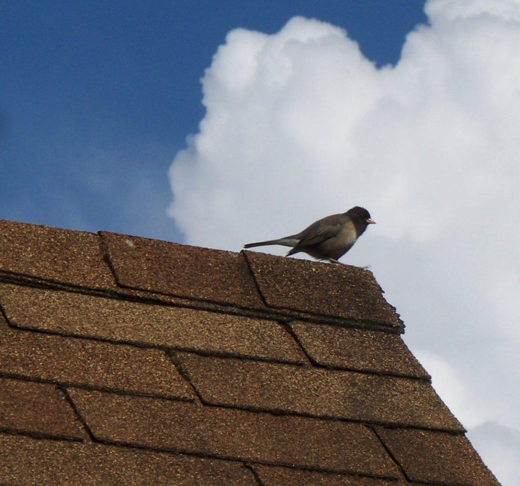 asphalt shingle roofing colors